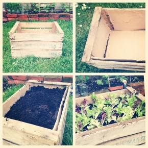 growyourownsaladbox