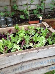 saladbox2
